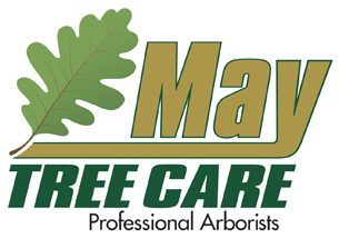 Tree Service in Camden & Burlington County NJ